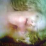 IMG-20120503-00784